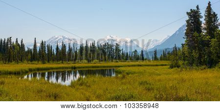 Still Alaskan Stream In Meadow