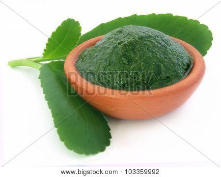 Medicinal Kalanchoe Leaves And Pasete