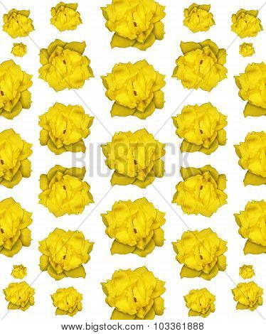 Isolated Yellow Rose Photo Pattern