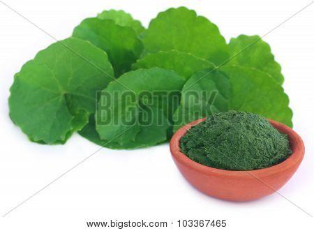 Medicinal Thankuni Leaves, Fresh And Crushed