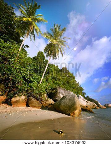 Malaysian Beach Island Vacation Summer Tropical Tree Concept