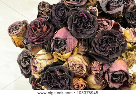 A Lot Of Wilted Rose
