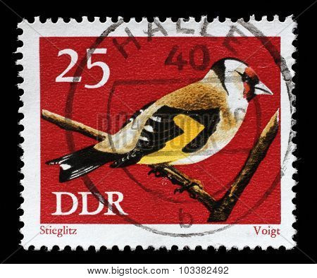 GDR-CIRCA 1973: A stamp printed in GDR shows bird European goldfinch or goldfinch (Carduelis carduelis) from the series Protected Songbirds, circa 1973.
