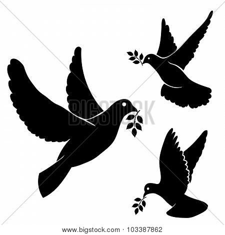 Set vector black silhouette flying dove, olive