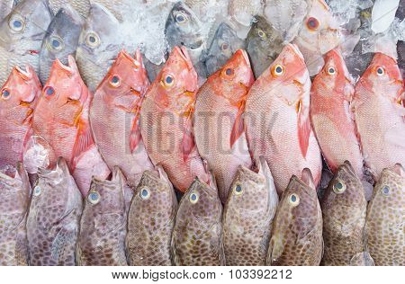 Fresh Fishes In Market With Red And White Snapper At Display. Marine Products Of Sabah Borneo.