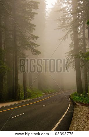 Mist In The Redwood Forest