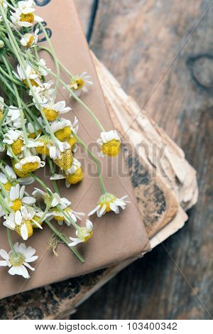 Old book with dry flowers on table close up