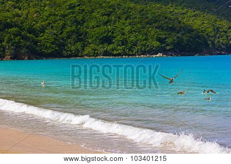 Tropical island beach with birds splashing in the water.