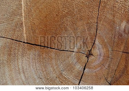 Texture Of Wood Logs Background With Crack Damage Of Aged Annual Rings