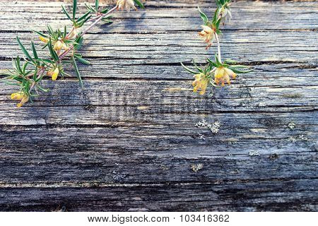 Wild Flowers On A Tree Trunk Without Bark