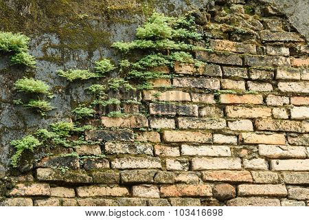 The Old Brick Wall With Moss
