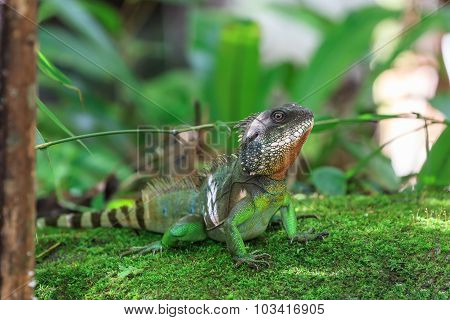 A Closeup Of The Chinese Water Dragon