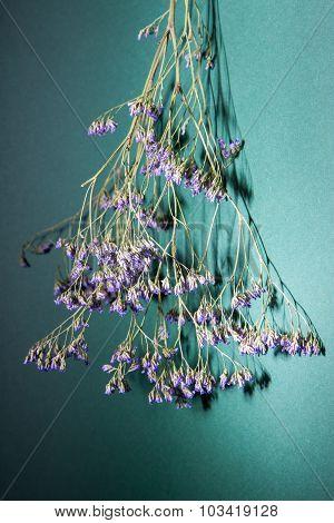 Herbarium Branch