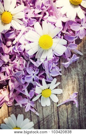 Chamomile and lilac flowers