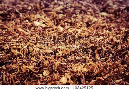 Tobacco close-up macro view.