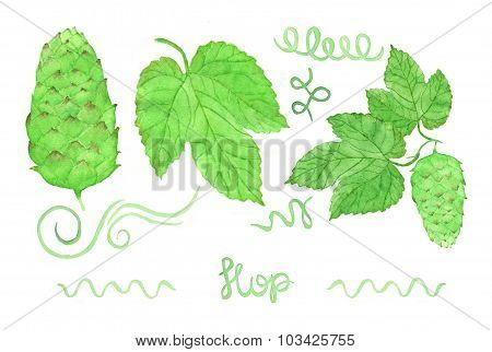 Hop, beer brewing set. Hand-drawn swirles, flower and leaves. Real watercolor drawing.