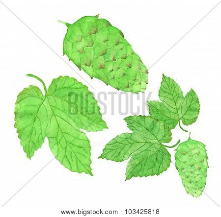Hop, beer brewing set. Hand-drawn flower and leaves. Real watercolor drawing.