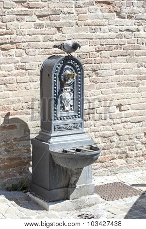 Old fountain with pigeon