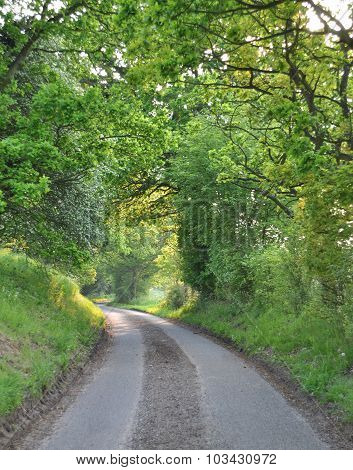 Tree tunnel on an English country road