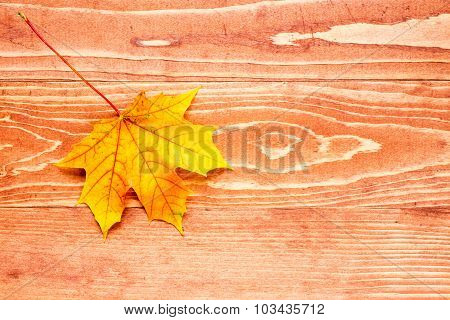 Maple Leaf On The Wood Background With Copy-space