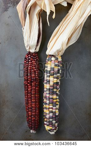 Indian Corn or Flint Corn on a metal baking sheet. High angle view in vertical format.