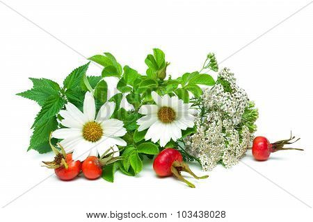 Nettle, Yarrow And Berries Of Wild Rose Isolated On White Background