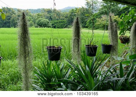 Flowerpot And View Of Rice Field