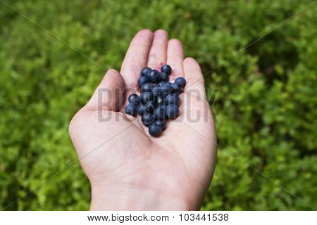 berries on palm