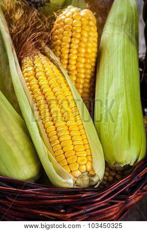 Organic Sweet Corn In Basket Closeup