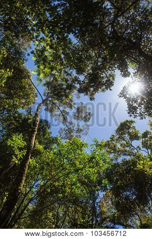 The Sun Breaks Through The Branches In The Jungle