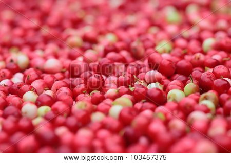 Texture of red forest lingonberries