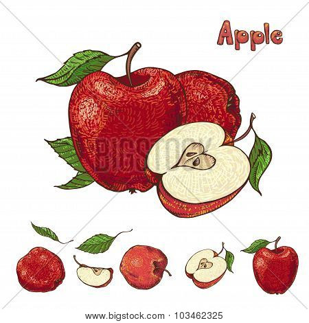 Hand Drawn Vector Apple Collection