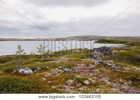 The tundra in the Arctic Circle