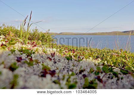 Summer Beach tundra polar region
