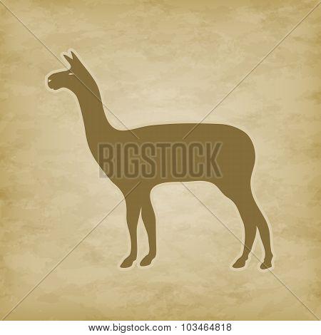 Lama on grunge background