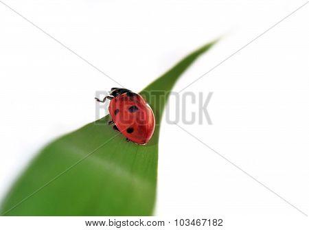 Pretty Ladybird
