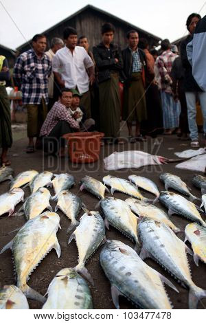 Fish Market In Sittwe, Myanmar