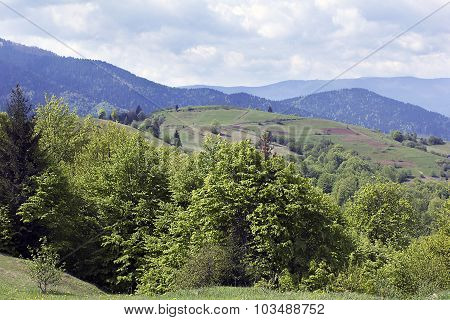 Landscape Of A Carpathians Mountains With Green Trees And Fir-trees