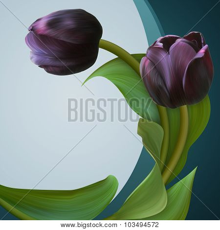Pair Of The Black Tulips In Beautiful Green Frame. Unique Banner For Congratulation, Conceptual Illu