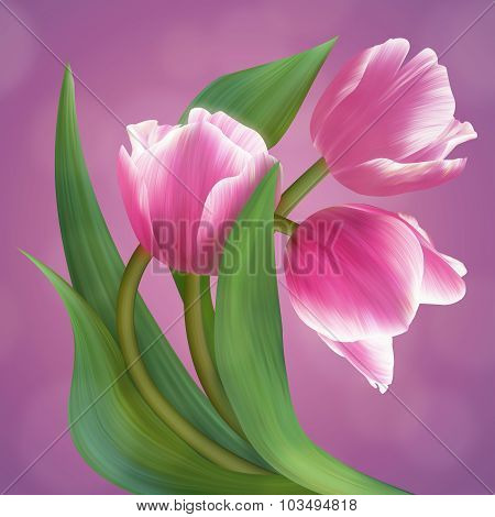 Beautiful Composition With Three Pink Tulips. Fresh And Sweet Illustration.