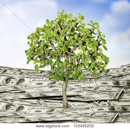 young plant money growth concept