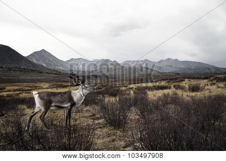 Deer Wildlife Tranquil Remote Rural Hill Mountain Concept