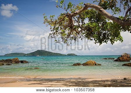 Tropical beach with tree  branches on the foreground