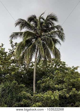 coconut tree in deep vegetation