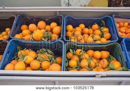 Oranges In Plastic Boxes