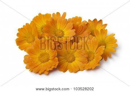 Heap of  fresh orange pot marigold flowers on white background