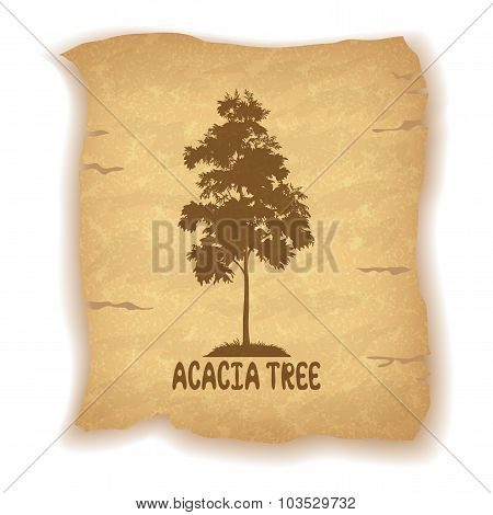 Acacia Tree on Old Paper
