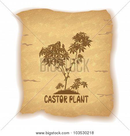 Castor Plant on Old Paper
