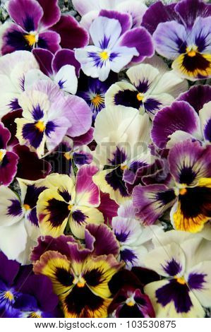 Background from flower pansy