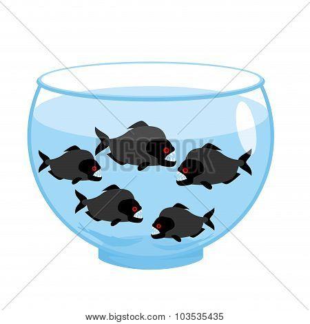 Aquarium With Piranhas. Dangerous Evil Toothy Fish. Scary Aquarium